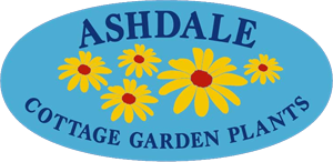 Ashdale Nursery - Nottingham's perennial plant specialist